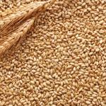 grain_10